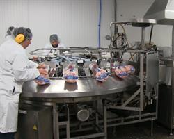 automated-packaging-line-for-whole-hens